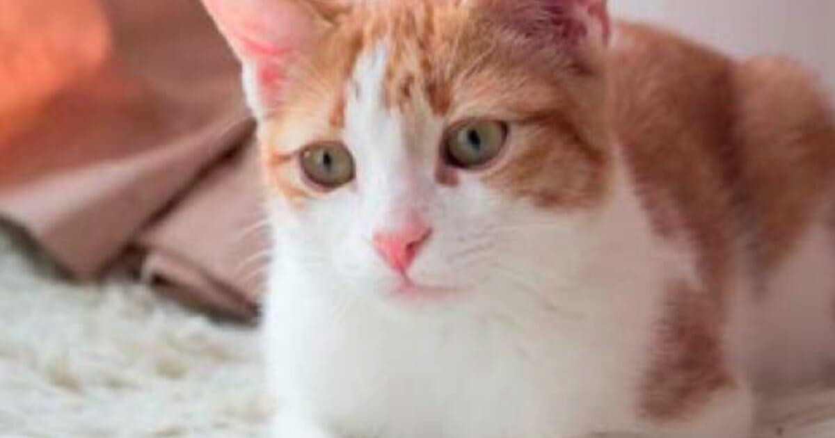 Feline Hyperthyroidism Veterinary Practice