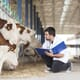 Cattle vets and COVID-19 thumbnail image