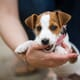 Preventing separation-related behaviours developing in puppies thumbnail image