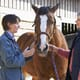 Artificial lens and optical implants to aid horses' vision thumbnail image