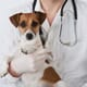 Is surgical castration right for every dog? thumbnail image