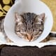 Recent evidence in feline medicine and surgery thumbnail image
