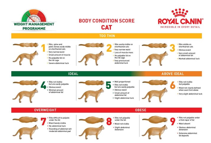 FIGURE (3) The Royal Canin cat body condition score sheet is used to communicate with owners about obesity