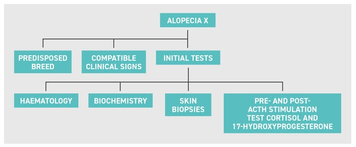 FIGURE (4) The diagnosis of alopecia X is based on history, clinical signs and initial tests; this is a suggested diagnostic pathway to rule in or out the main differentials