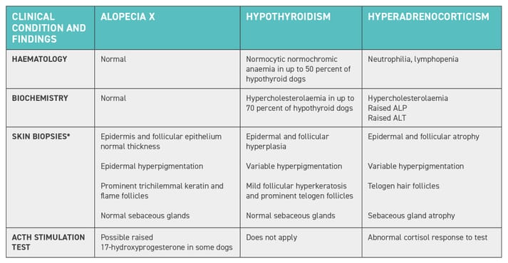 Table 1: Brief summary of the differences in laboratory findings between alopecia X, hypothyroidism and hyperadrenocorticism. *There can be an overlap between the histological findings, and they must be interpreted in context with the history, clinical signs and results of diagnostic tests