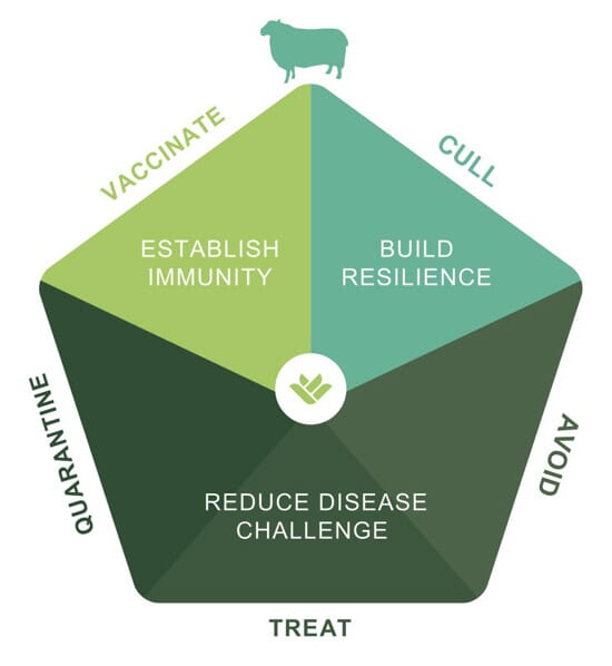 FIGURE (1) The five-point plan, developed by FAI, focuses on three main areas to meet the challenge of reducing lameness: reduce disease challenge, establish immunity and build resilience