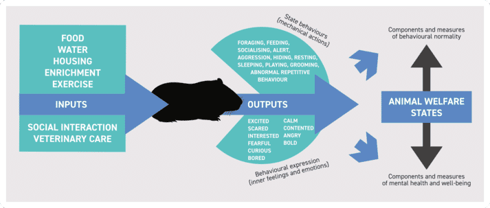 Figure (1) The interaction between inputs (ie the resources provided to the pet or companion animal) and the outputs (behaviour patterns and expressions of emotion or mood) that illustrate mental health status
