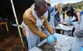 Figure (4) Dr Christophe Ntakirutimana from Rwanda demonstrates his dissection skills thumbnail