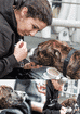 FIGURE (2) The StreetVet team provide veterinary care to dogs in the street, including health checks and vaccinations, preventative medicine, surgery, owner education and more