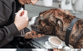FIGURE (2) The StreetVet team provide veterinary care to dogs in the street, including health checks and vaccinations, preventative medicine, surgery, owner education and more thumbnail