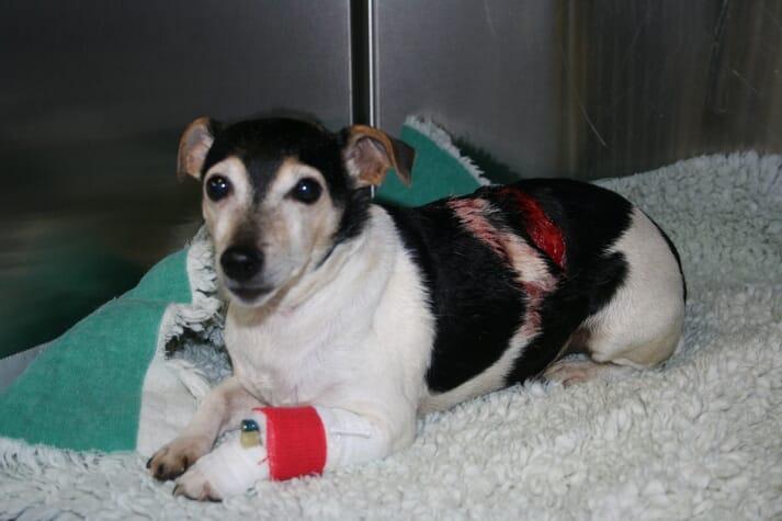 Hospitalised dog