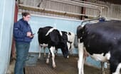 FIGURE (2) Mobility scoring is done by a RoMS approved Cattle Lameness Academy vet tech thumbnail