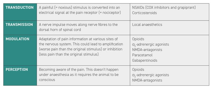 table showing the different pain pathways and which drugs are active at each level