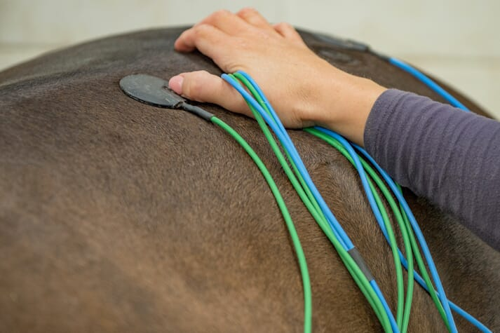 equine veterinary physiotherapist horse