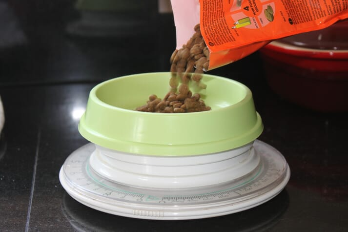 FIGURE 2 Over-feeding just a few kibbles a day could reduce weight loss in cats, so clients should be encouraged to use an electronic scale