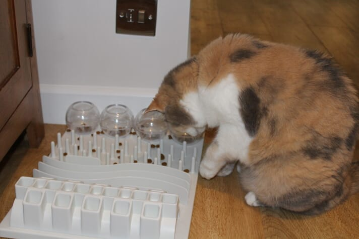 FIGURE 3 Puzzle feeders occupy hungry cats and encourage increased movement