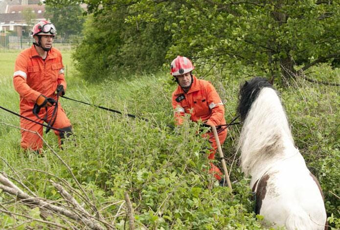 A pony was pulled from the bushes near Hurstpierpoint, Sussex