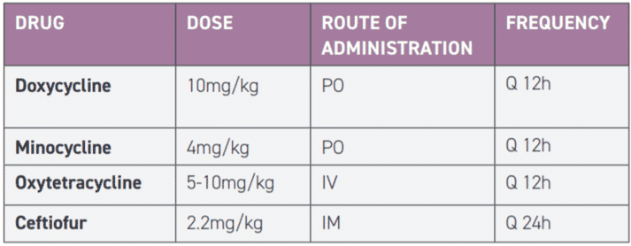 TABLE 1 Drug dose, route and frequency for Borrelia burgdorferi treatment